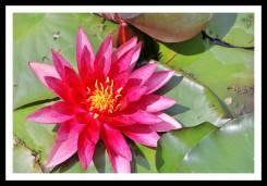 Flor no Jardim Botânico de Zagreb