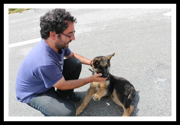guia turistico cachorro hvar croacia offroad.jpg