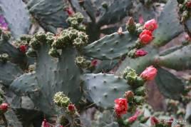 Há todo tipo de plantas ao redor da trilha!