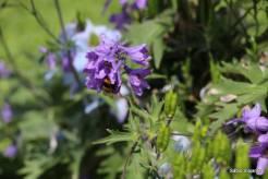 Conseguem enxergar a abelha?