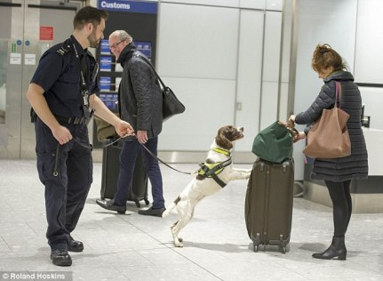 Ruby, em 6 anos, detectou mais de 10 milhões de libras no aeroporto de Heathrow!