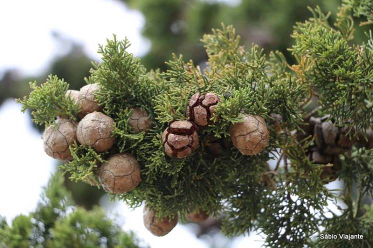 Alguém conhece esta planta? Se souberem o nome, por favor nos indiquem!