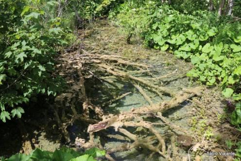 Os galhos e rochas caem nas águas ricas em minerais...