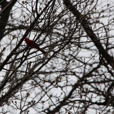 Como se alguém conseguisse ver o passarinho, né? Mas é assim mesmo, tem que ir tentando para se habituar!
