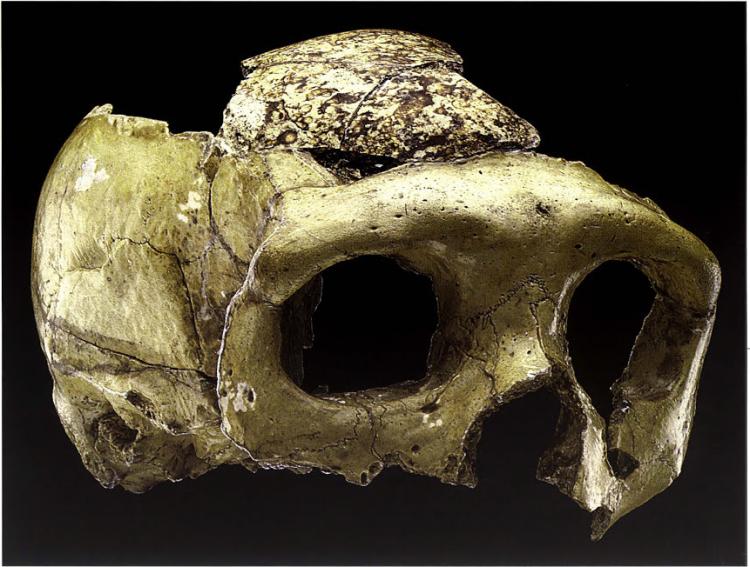 krapina neanderthal.png
