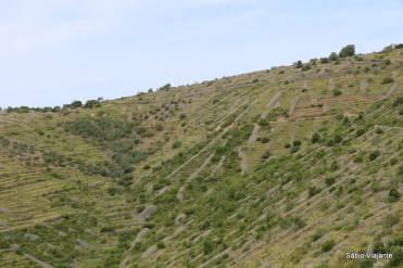 Terraços usados para plantação na ilha