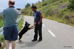 Como Ivor sempre aparece por lá, o cachorrinho já se acostumou com ele!