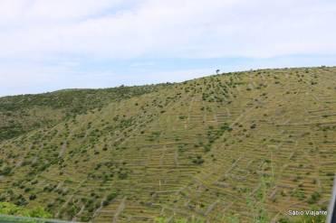 Terreno acidentado fez com que os romanos trouxesse a técnica de terraços para a Ilha de Hvar