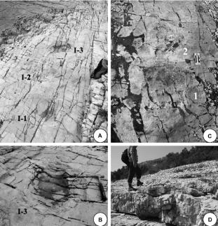 Fotos do estudo detalhado sobre as pegadas: 2 animais saurópodes, provavelmente titanossauros