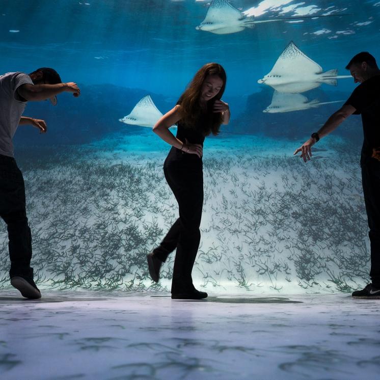 Realidade interativa: visitantes terão a experiência de imersão no Oceano Pacífico