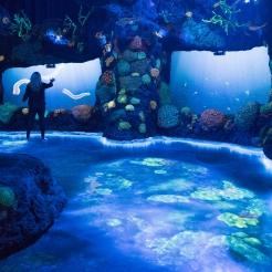 Mais cenários do National Geographic Encounter: Ocean Odyssey
